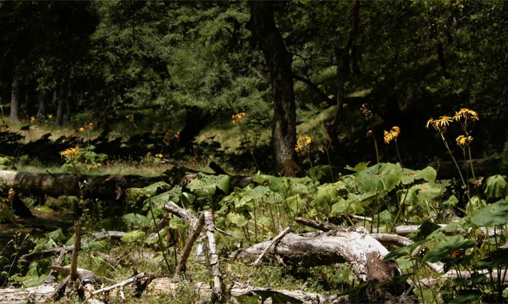 Forest Conservation 〜森林を守る〜